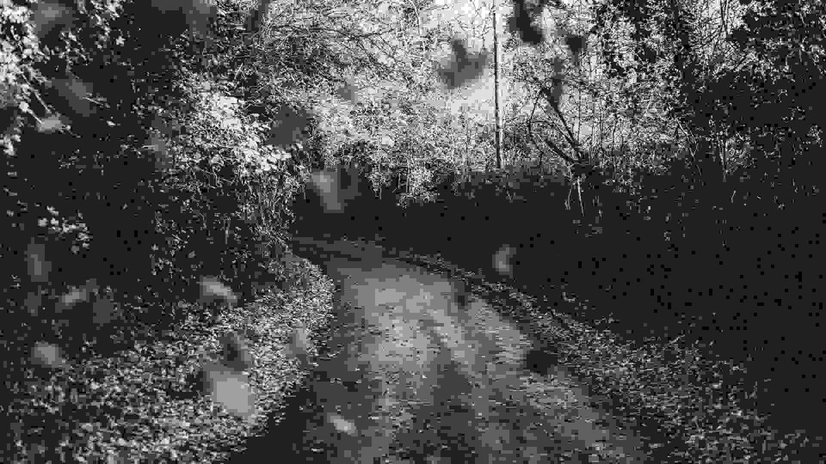 Road in woods